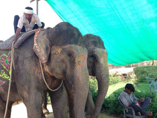 Elephant Activity Planner