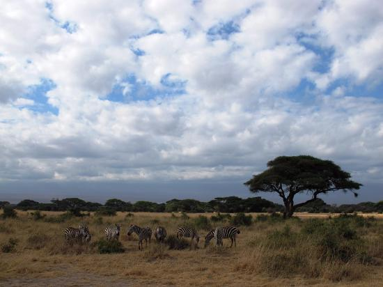 Amboseli Hotels Tripadvisor