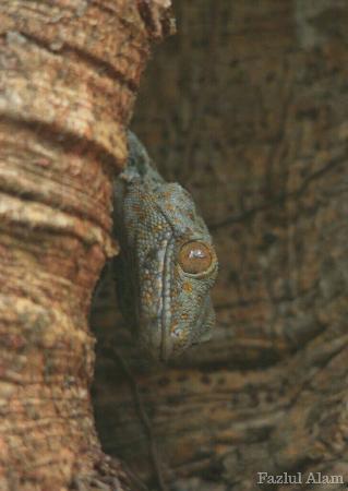 Nameri National Park, India: _MG_6875_wm_large.jpg