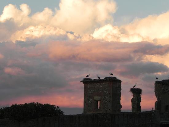Cigüeñas en el Convento