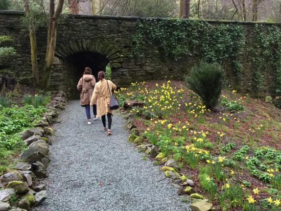 Lake District Tours: Walk amongst the daffodils