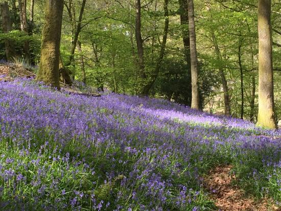 Lake District Tours: Glorious bluebells in May