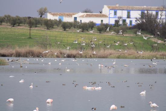 Daimiel, Spanyol: LLegando