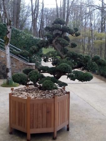 Arbre super bien taill picture of les jardins de l 39 imaginaire terrasson lavilledieu - Les jardins de l imaginaire a terrasson ...