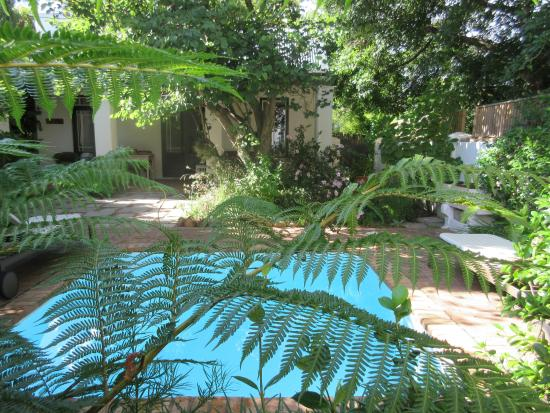 Akademie Street Boutique Hotel and Guest House: Our private garden and plunge pool