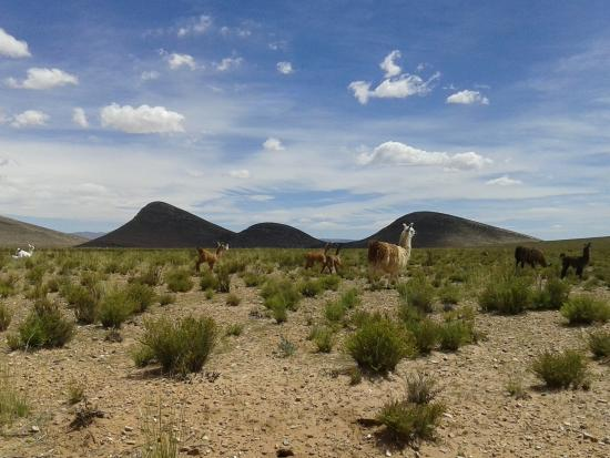 Petroglifos de Laguna Colorada