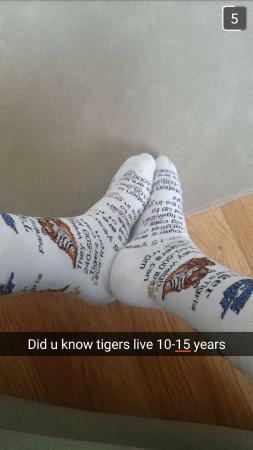 Socks from the gift shop that are full of tiger facts picture of big cat rescue socks from the gift shop that are full of tiger facts negle Choice Image