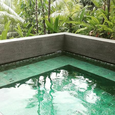 Garden villa plunge pool picture of capella singapore for Garden plunge pool