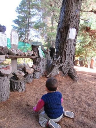 Museo de Piedras Patagonicas: que le puede molestar que el nene juego con esas hojas secas.