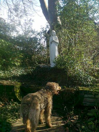 Alnmouth, UK: Franciscan Friary gardens, with Airedale Terrier