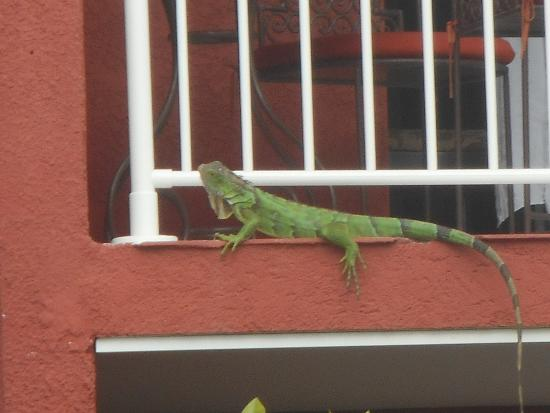Special Guest at Palm Court Hotel, St Martin