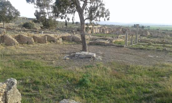 El Fahs, Tunisia: Boutiques(au fond) et balance(sous l'arbre)