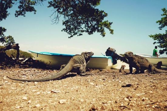República Dominicana: posando para nosotros en un islote dentro de la laguna.