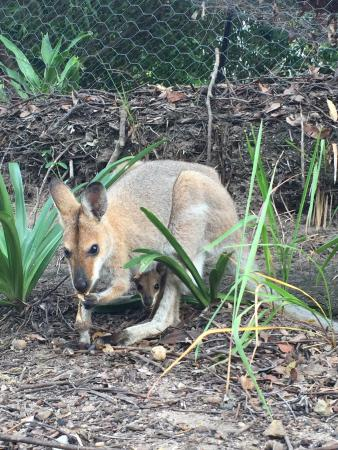 Foto de Wallaby Ridge Retreat