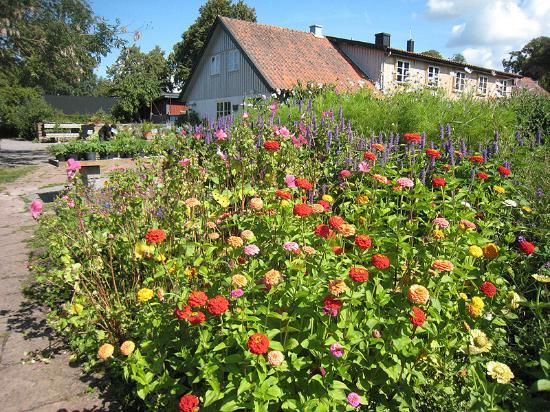 Capellagarden: Capellagårdens trädgård.