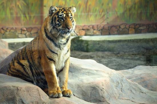 Lutsk Zoo