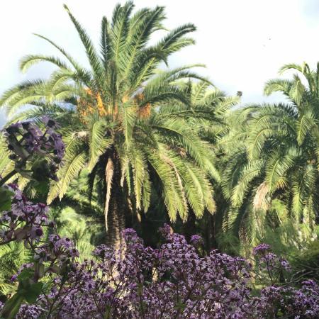 Foto de jard n bot nico viera clavijo las palmas de gran canaria jard n bot nico canario - Jardin botanico canario ...