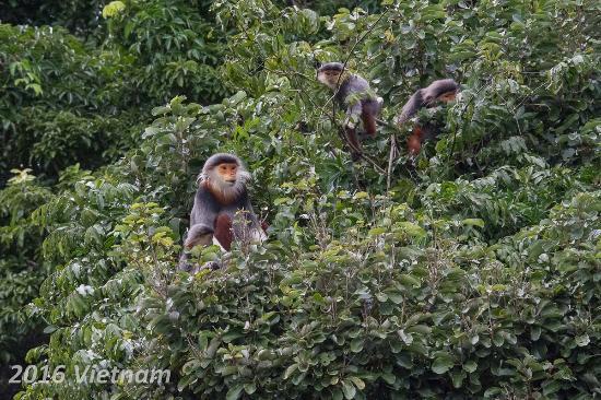 Kết quả hình ảnh cho son tra monkey mountain vietnam