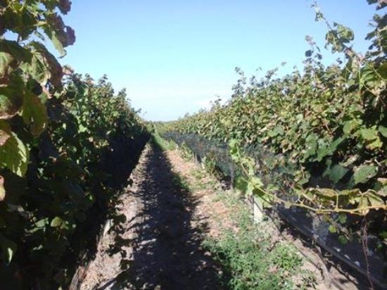 Feeling Uruguay Wine & Sightseeing Tours: Uruguay wine tour