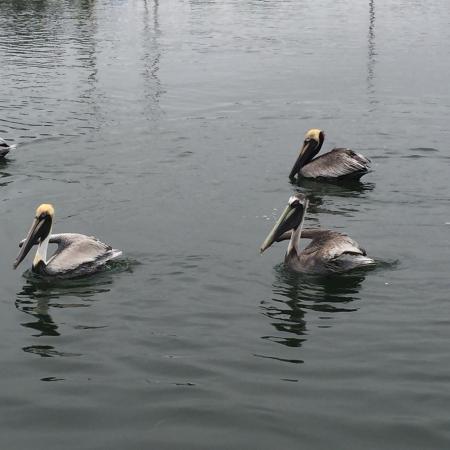 Anclote River Park: photo0.jpg
