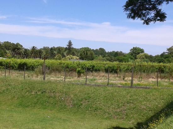 Bernardi Winery