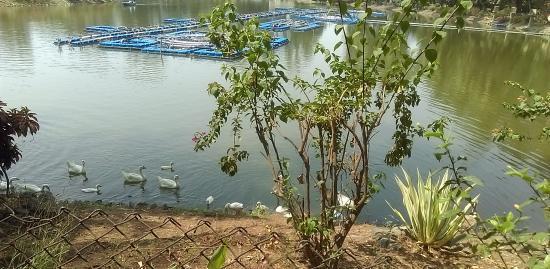 Vanganga Lake Garden: Lake..