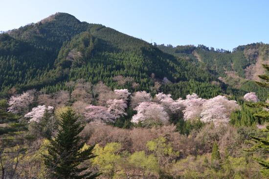Tokinosumika Morinokuni