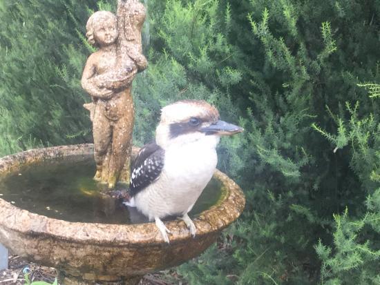 Kookaburra Motor Lodge: photo0.jpg