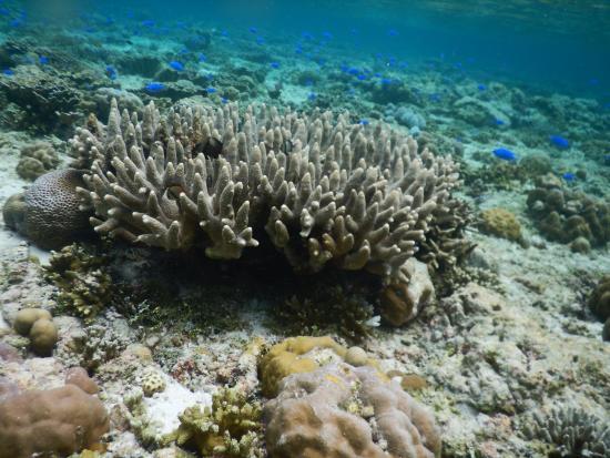 Patuno Resort Wakatobi : Colourful Coral