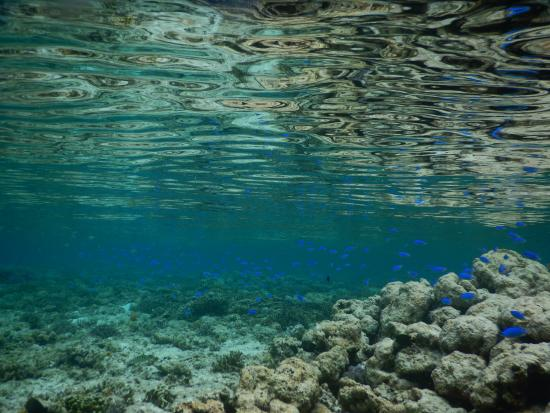 Patuno Resort Wakatobi: I like to be.... under the sea...