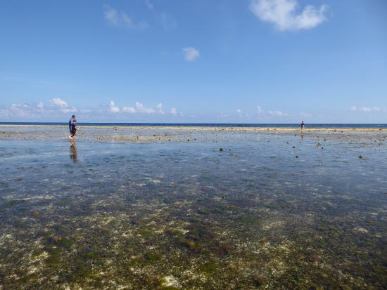 Patuno Resort Wakatobi : Rockpool Ramble