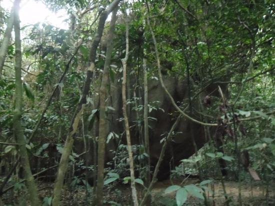 Korup National Park, Camerún: Poacher's rock