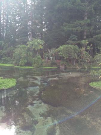 Hamurana, نيوزيلندا: Stunning Clear Water