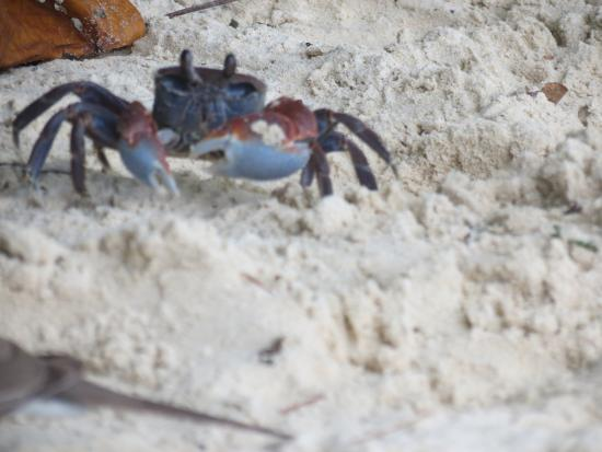 Praslin Island, Seychelles: crabe