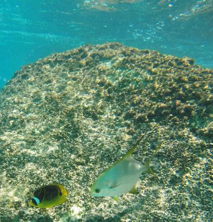 Praslin Island, Seychelles: poisson