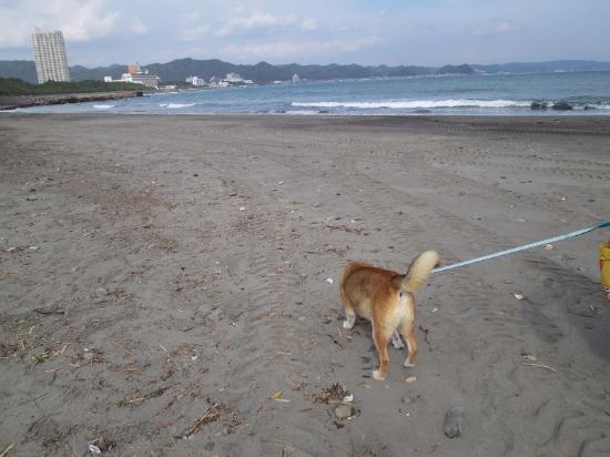 Maebara Beach: 広くてきれいな砂浜と犬