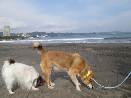 Maebara Beach: 広くてきれいな砂浜と犬2匹