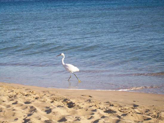 Makadi Bay, Egypt: Visitors