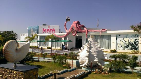 Shell Exhibition Mahabalipuram : Sea shell museum picture of india seashell