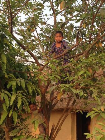 Nature Safari Resort & Lodge: Kids playing in the trees