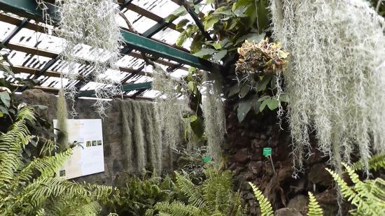 Jardin de mascarin demeure principale serre des foug res picture of conserv - Serre de jardin 12m2 ...