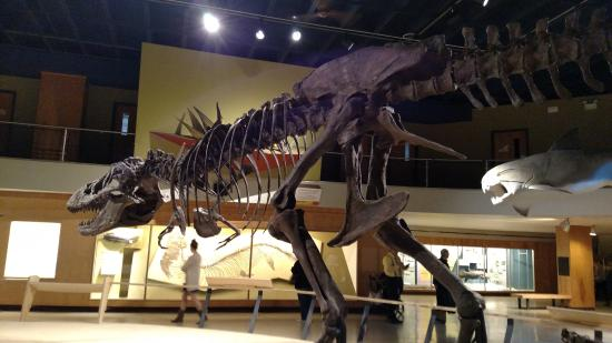 Picture of cleveland museum of natural Dinosaur museum ohio