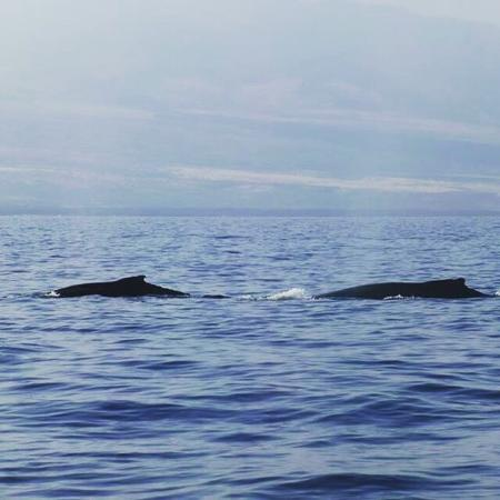 Ocean Sports Whale Watch Adventure: Saw so many whales