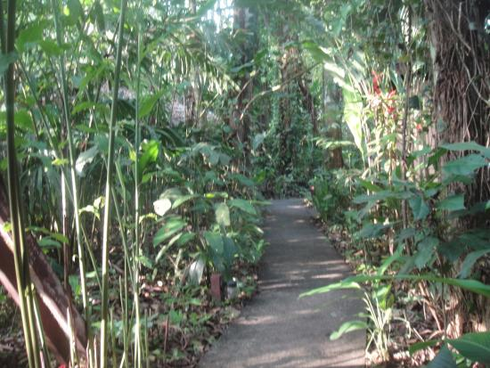 Namuwoki Lodge: caminitos entre habitaciones