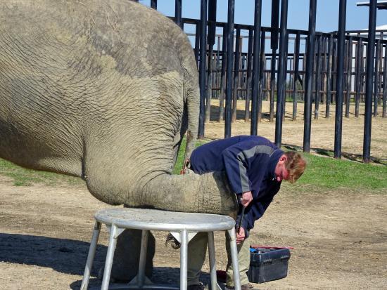 Hugo, OK : Demonstrating Foot Care