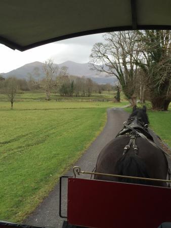 Killarney Royal : Carriage Ride through Killarney National Forest