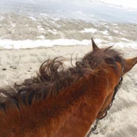 Long Beach, Вашингтон: Bessie on the beach