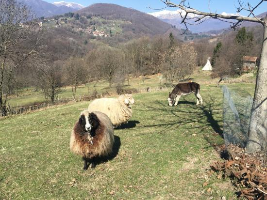 Armeno, Italië: photo2.jpg