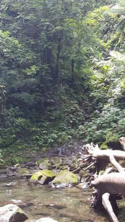 Mt Isarog National Park: Lovely Creeks along the trail