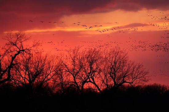 Gibbon, NE: Evening arrivals...  March, 2016